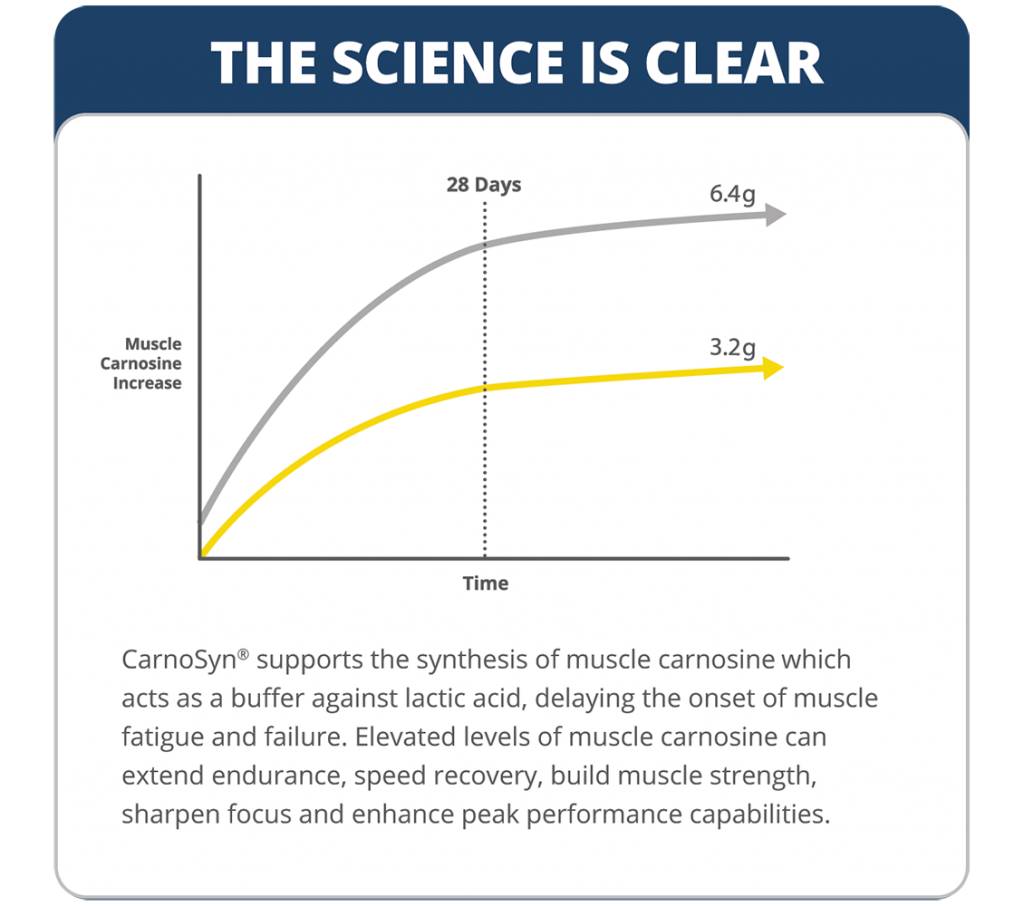 CarnoSyn muscle carnosine increase over time