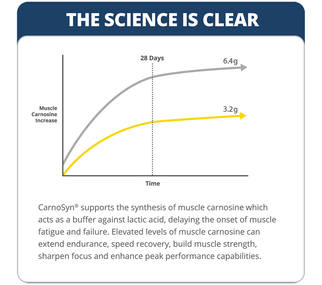 CarnoSyn muscle carnosine increase over time