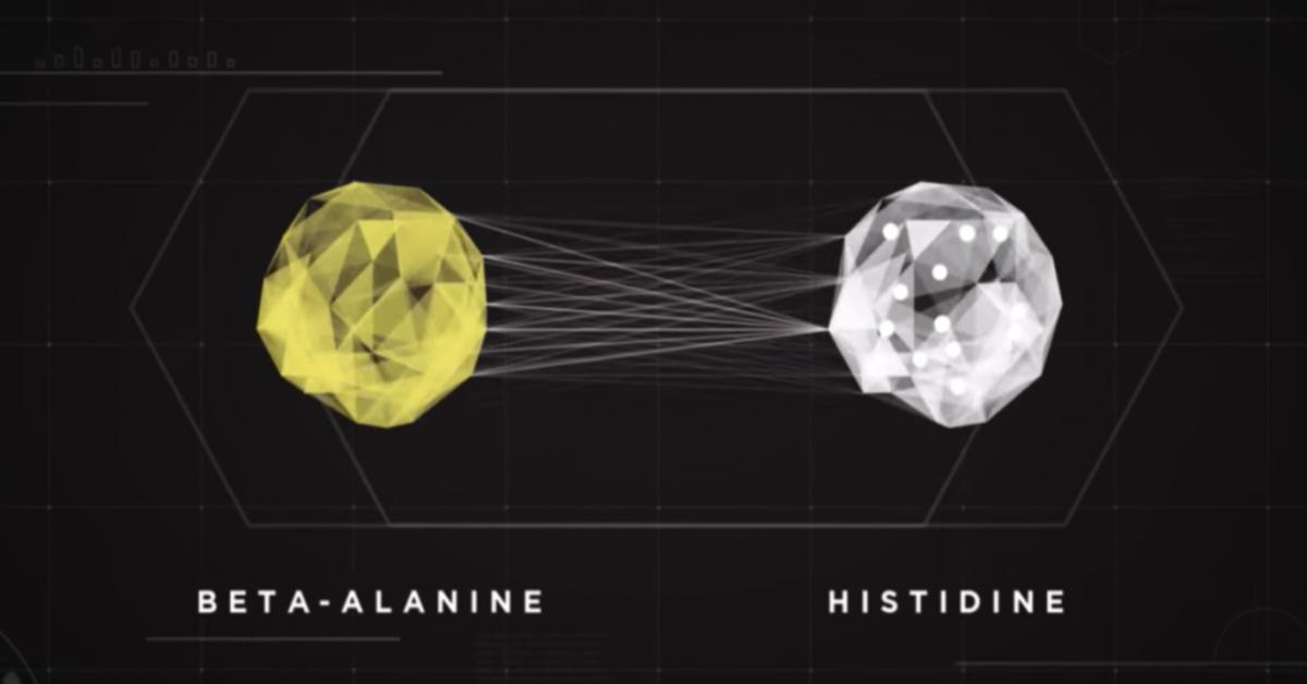 How Does Beta-Alanine Work?